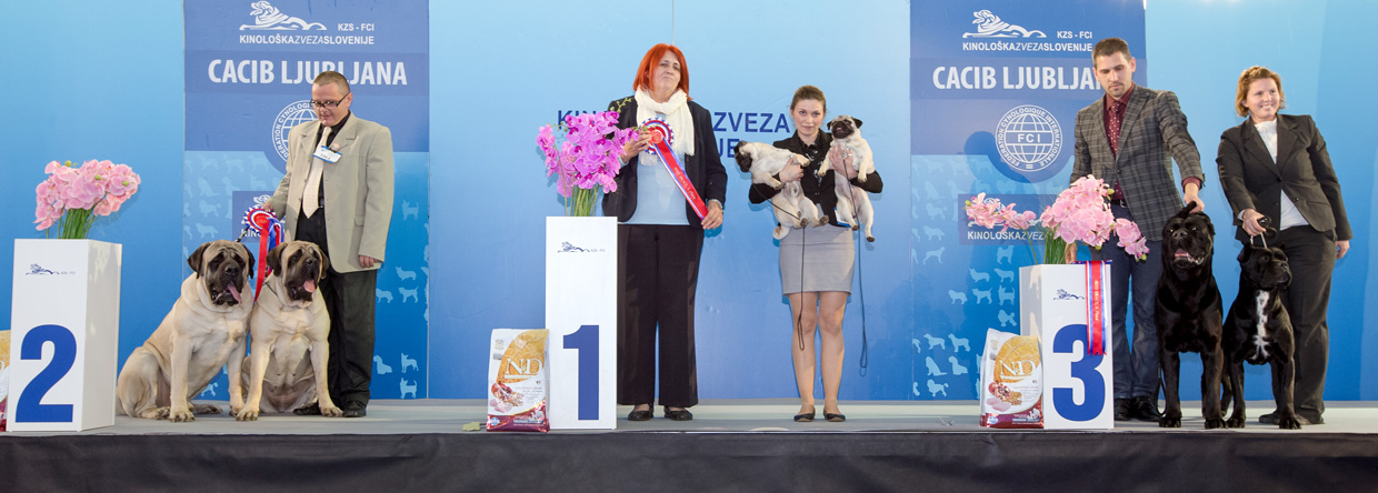 Best Brace - Winners of the International Dog Show Ljubljana 1 (Slovenia), Saturday, 16 January 2016 (BIS photo)
