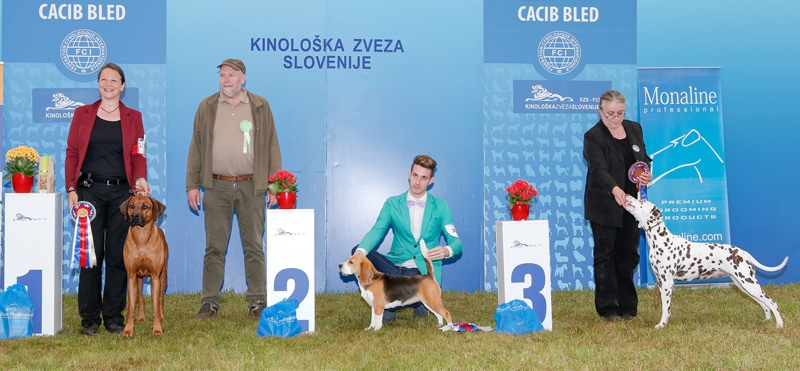 FCI Group VI - BIS CACIB Bled I (Slovenia), Saturday, 11 June 2016 (photo)