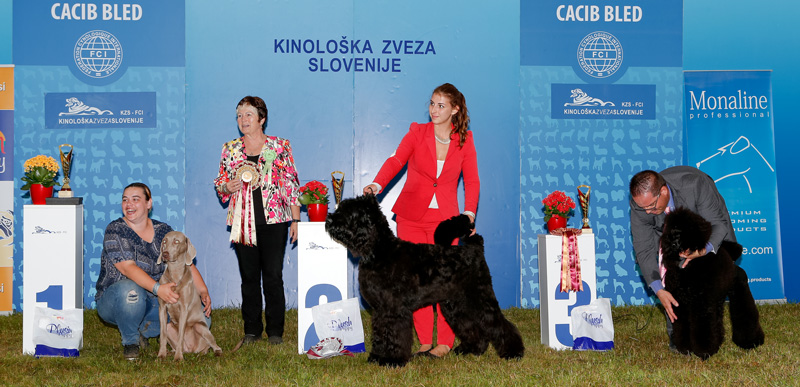 Best Junior - BIS CACIB Bled I (Slovenia), Saturday, 11 June 2016 (photo)