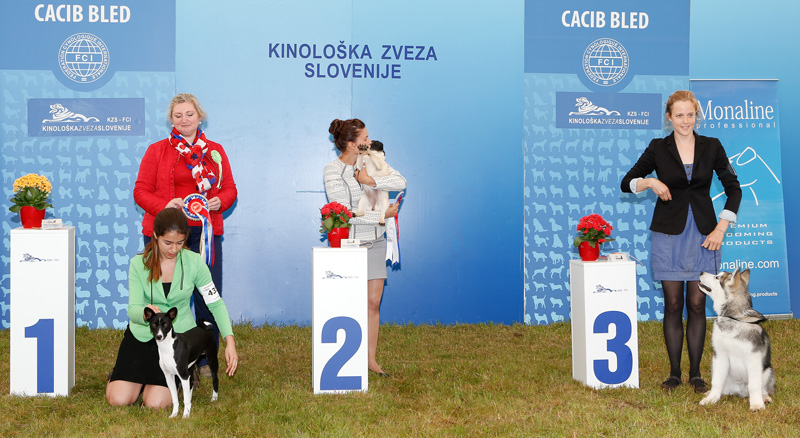 Best Minor Puppy - BIS CACIB Bled I (Slovenia), Saturday, 11 June 2016 (photo)