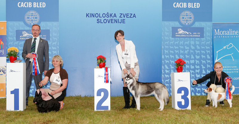 Best Puppy - BIS CACIB Bled I (Slovenia), Saturday, 11 June 2016 (photo)