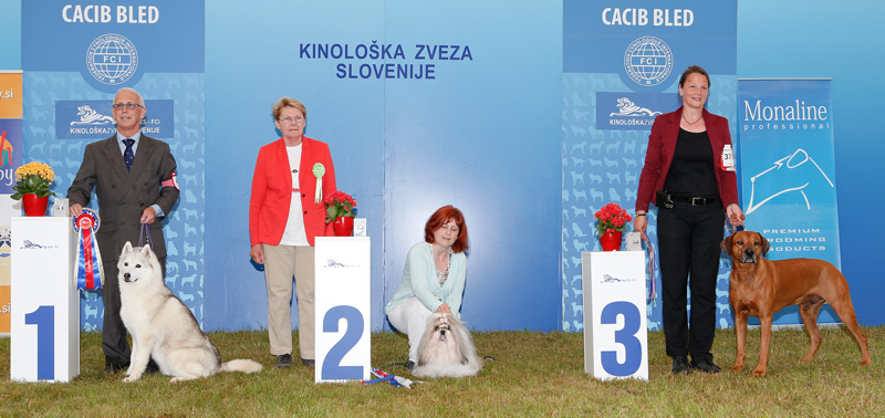 Best Veteran - BIS CACIB Bled I (Slovenia), Saturday, 11 June 2016 (photo)