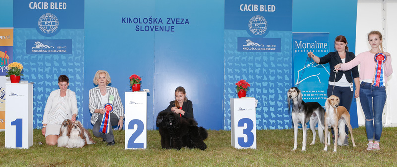 Best Brace - BIS CACIB Bled I (Slovenia), Saturday, 11 June 2016 (photo)