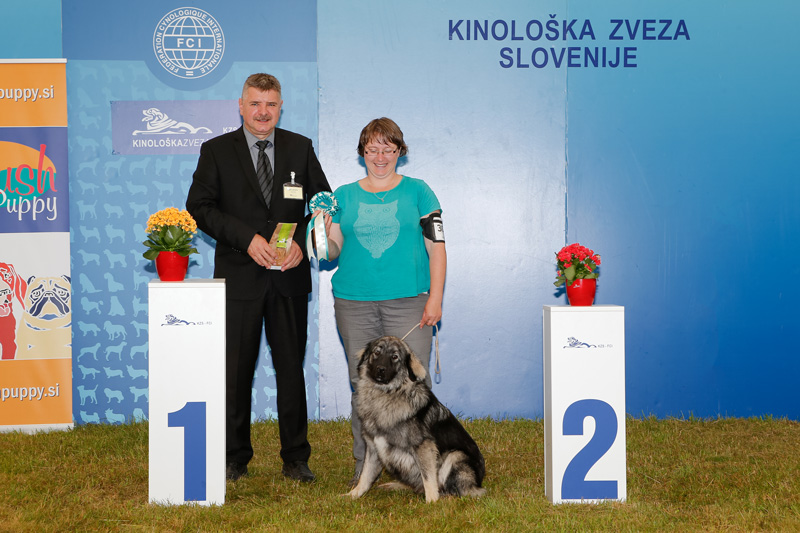 Best Karst Shepherd Dog - BIS CACIB Bled I (Slovenia), Saturday, 11 June 2016 (photo)