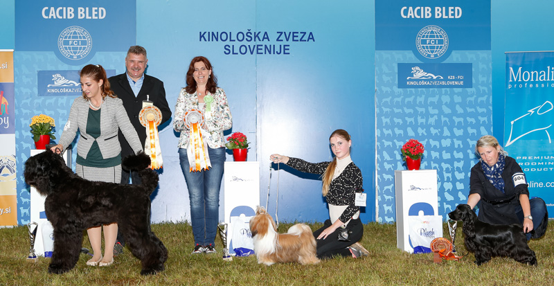 Best Junior - BIS CACIB Bled II (Slovenia), Sunday, 12 June 2016 (photo)