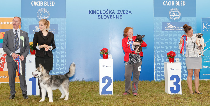 Best Minor Puppy - BIS CACIB Bled II (Slovenia), Sunday, 12 June 2016 (photo)
