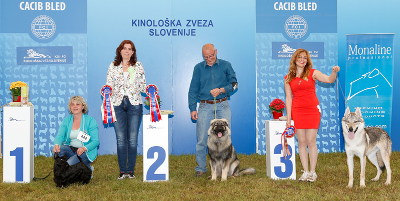 Best Puppy - BIS CACIB Bled II (Slovenia), Sunday, 12 June 2016 (photo)