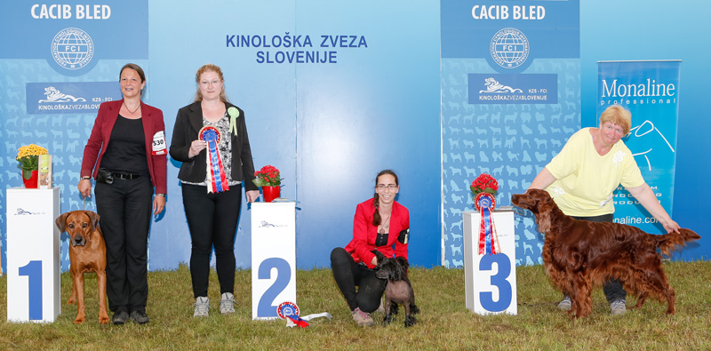 Best Veteran - BIS CACIB Bled II (Slovenia), Sunday, 12 June 2016 (photo)