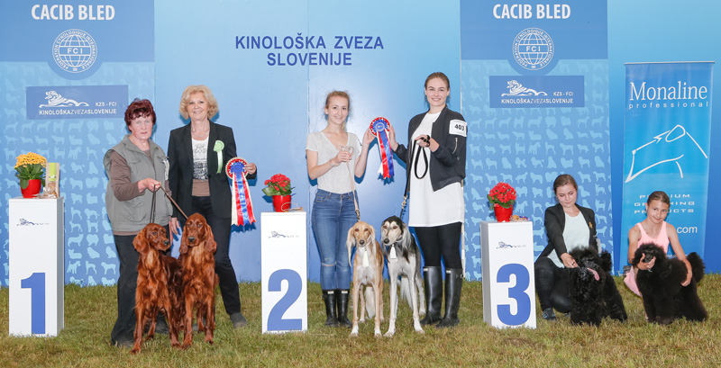 Best Brace - BIS CACIB Bled II (Slovenia), Sunday, 12 June 2016 (photo)