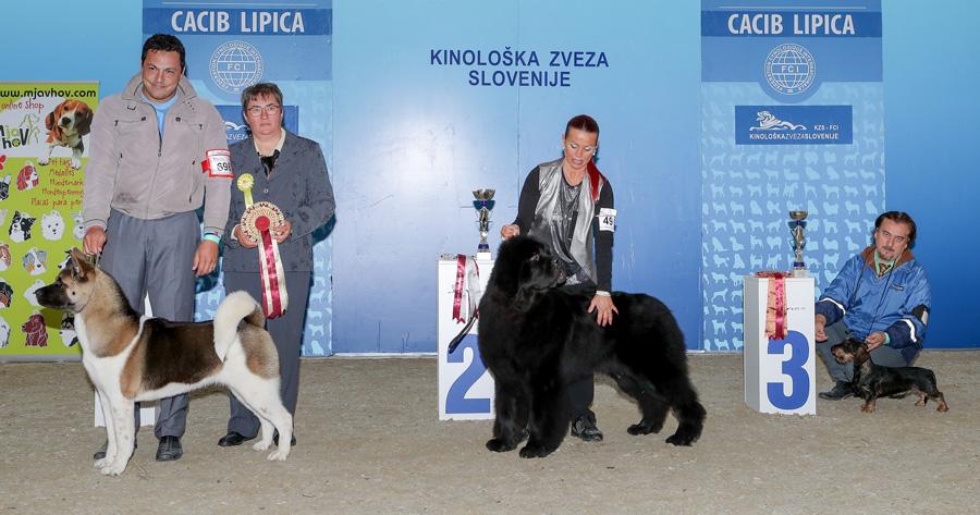 Лучший юниор - BIS IDS Липица (Словения), суббота, 8 октября 2016 года