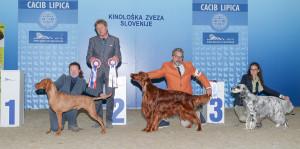 caciblipica2016dan1-19