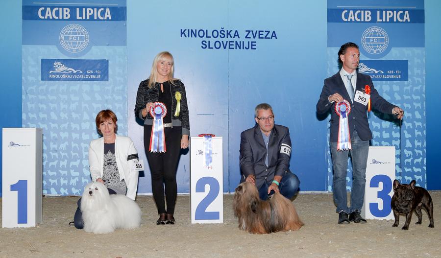 Группа FCI IX - BIS IDS Липица (Словения), суббота, 8 октября 2016 года