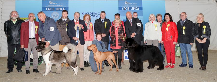 Лучшая собака выставки (BIS) - BIS IDS Липица (Словения), суббота, 8 октября 2016 года