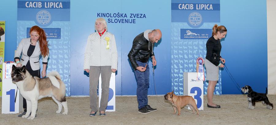 Лучший щенок - BIS IDS Липица (Словения), суббота, 8 октября 2016 года