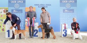 caciblipica2016dan2-15
