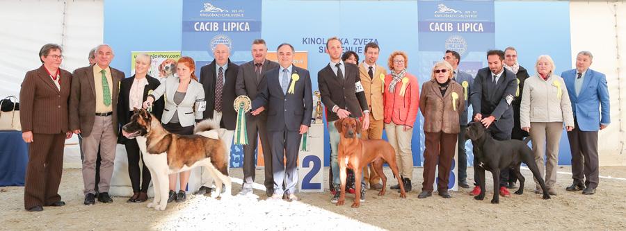 Лучшая собака выставки (BIS) - BIS IDS Липица (Словения), воскресенье, 9 октября 2016 года