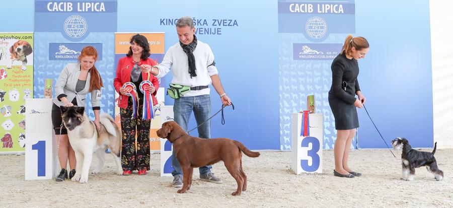 Лучший щенок - BIS IDS Липица (Словения), воскресенье, 9 октября 2016 года