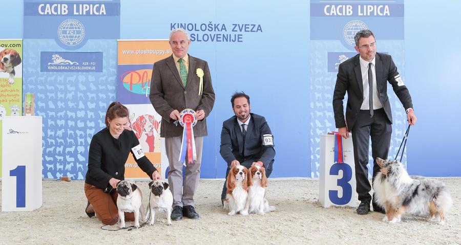 Лучшая пара - BIS IDS Липица (Словения), воскресенье, 9 октября 2016 года